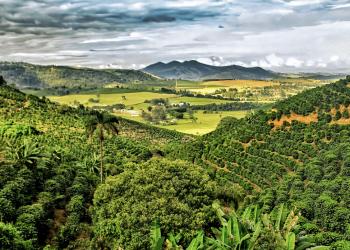 Picture: Fazenda Delta in Santa Rita do Sapucai, Brazil